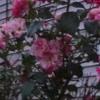 Audio 1 03 SINE Alt2 - Slight - Longer - No - Fluct - 2-ENDING - ALT - White Noise