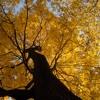 MACRIMA - Kleine Herbstfreuden