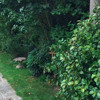 Ambient sounds: My English country garden
