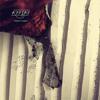 Kypski - Wreck Fader Ft D - Styles