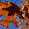 Erdi'nin Güncesi - Eylül Biter, Ekim Başlar mp3