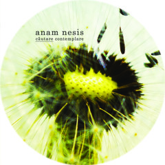 Anam Nesis - Căutare