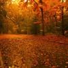 Autumn's Here (Hawksley Workman)