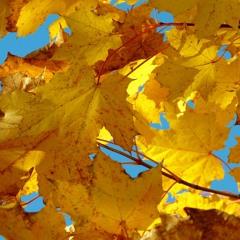 MACRIMA - Oktobergold