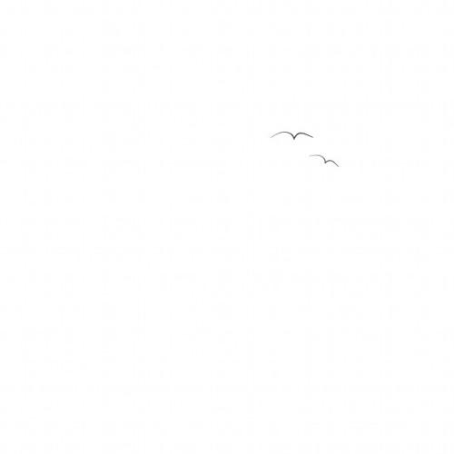 Birds (Demo)