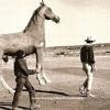 Fake Horse
