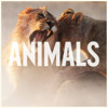 Maroon 5 - Animals (Instrumental / Karaoke)