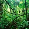 My Head Is A Jungle (Spekktrum Remix) (Free Download)