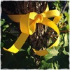 Tie A Yellow Ribbon (Tony Orlando and Dawn cover)