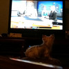 Dog TV VW #3 (bc)