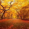 Sunday Session - Autumn 2014