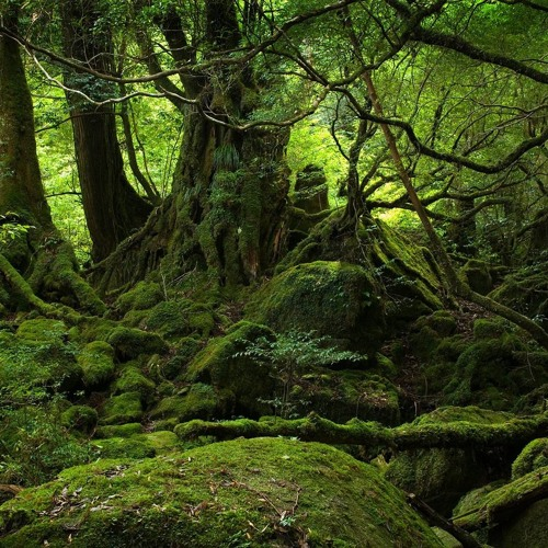 Flourish in Aokigahara - Camy meets D.Lady