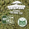 Origin One Ft Cheshire Cat - Good Ganja (DJ Maars Remix) *OUT NOW!!!*