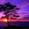 Shores of Purple (148bpm)