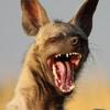 Leftfield Dj Mix - Banging Hyena (Oct 2014)