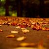 Autumn Was Lost In The Leaves _ Fariborz Lachini | پاییز در برگ ها گم بود ـ فریبرز لاچینی