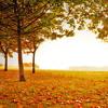 Autumn Piano Chillout Lounge