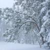 Download Winter Sadness Part. 1 Mp3