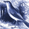 Ode To A Nightingale (excerpt)