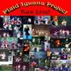 Plaid Iguana Project LIVE -