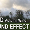 WIND - Strong Autumn Wind sound effect