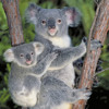 Hello Alien - My Little Koala