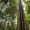 Hinos de Louvor a Natureza