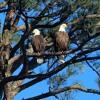 Eagle Scouts Poem