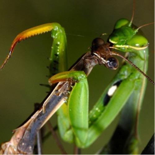 Mantis (digital 8-track, 2012)