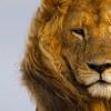 The Wild Lion (feat. Askata)