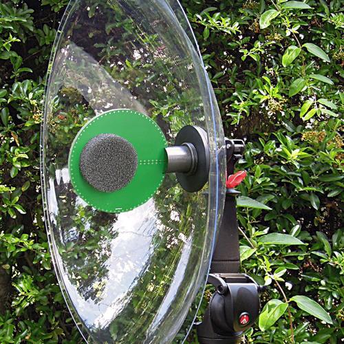 HiSound STEREO Parabolic Microphone - Rallus Aquaticus Water Rail - Primo EM172 LS11.WAV