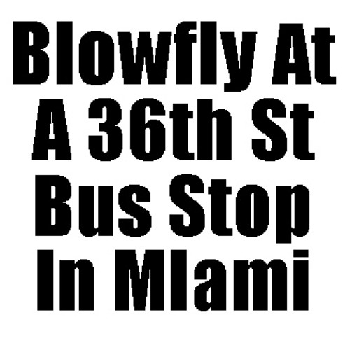 Blowfly at a 36th St Bus Stop In Miami