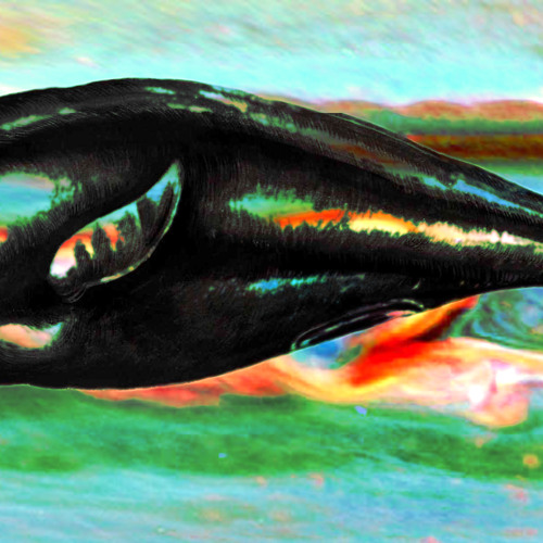 Zorro Live at the Apocalypse : Whales of Saturn