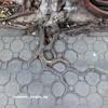 kidnapp-concrete jungle e.p..mp3