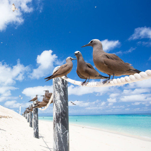 Michelmas Cay, Great Barrier Reef, Australia