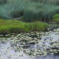 Cocoparra Marsh