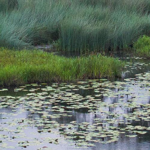 Cocoparra Wetland at Dusk, NSW. Australia