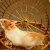Dj Myke - The hamster running (turntable music)