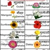 Melodious Names Of Flowers