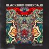 Blackbird Blackbird -  Visionary