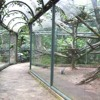 Ibert - Histoires: La Cage de Cristal no 8