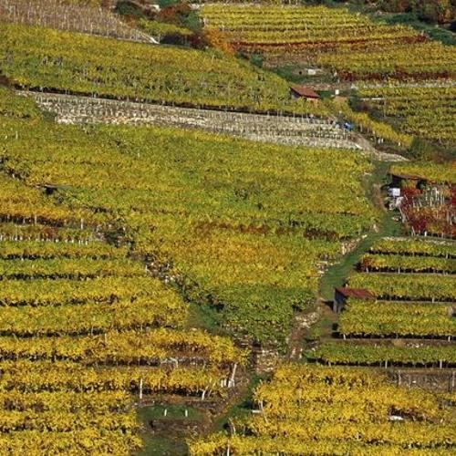 Gruner Veltliner and Beyond: Diving into Austrian Wine