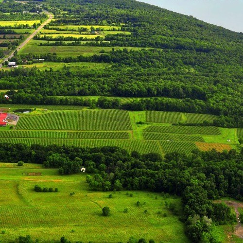 Bellwether Wine Cellars: The Fascinating Finger Lakes