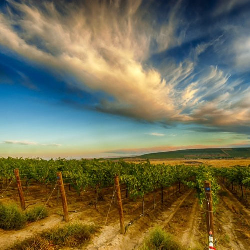 Wine Country Photography 101: How To Take Great Pictures in the Vineyards