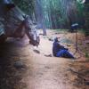 Acoustic Ecologies #36 : Tuolumne Grove of Giant Sequoias, Yosemite
