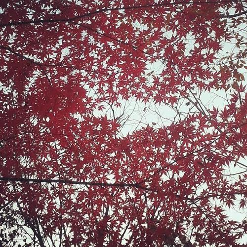 Bstep - Canopy