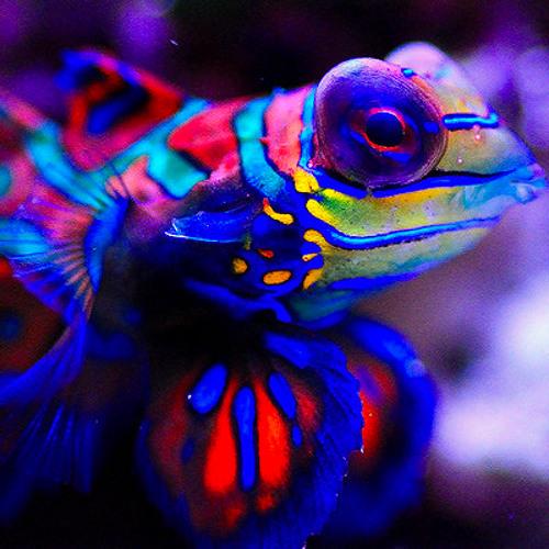 FluorEnzo, Chameleon - Devil Fish (Original Mix)
