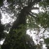 Walking To Tsitsikamma Big Tree, Eastern Cape, South Africa
