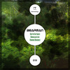 Bearman - Deep In The Forest - (Original Mix) - TERM019 - Prev