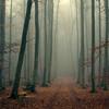 Autumn Mist Mix by paszczak
